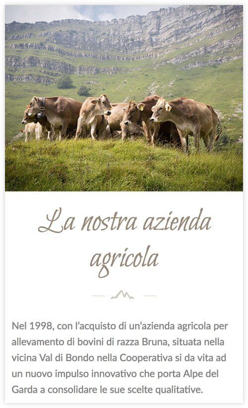 Versione responsive del sito internet Alpe del Garda